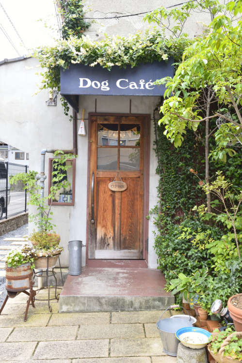 撮影協力 Dog café General store