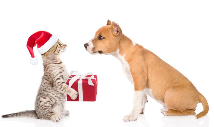 犬猫グッズを買うだけで寄付に繋がる! 保護犬・猫もみんな幸せになる「サイト7選」