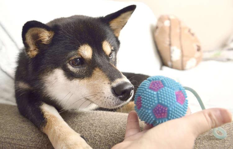そのボールは好きなの?