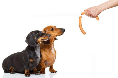 【獣医師監修】犬に人間用のソーセージを与えても大丈夫? 人間用ソーセージの成分とデメリットについて
