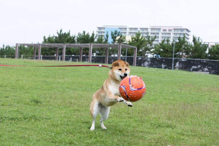 ボール待て~~!