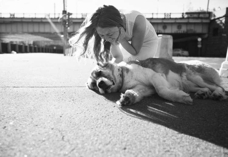 犬の脳震盪 考えられる原因や症状、治療法と予防のポイント