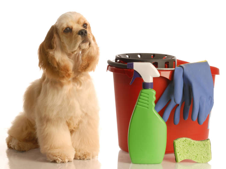 今年の大掃除はこれでラクラク! ペットの毛や臭いを除去するお助けグッズ特集