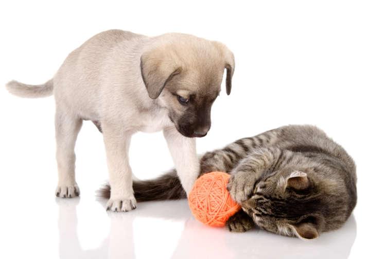 材料費200円以下で簡単にできる! 身近なアイテムで犬・猫のおもちゃを作ってみよう