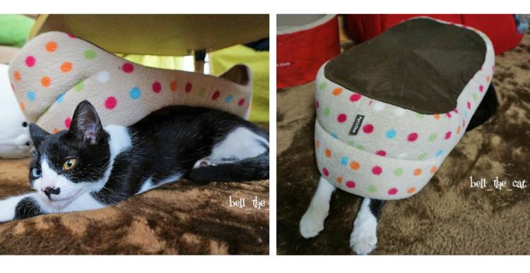 """【新しすぎる使い方♪】ベッドの下に潜ってぬくぬくする、""""ヤドカリ猫"""" さんが可愛すぎた(*´ω`)♡"""