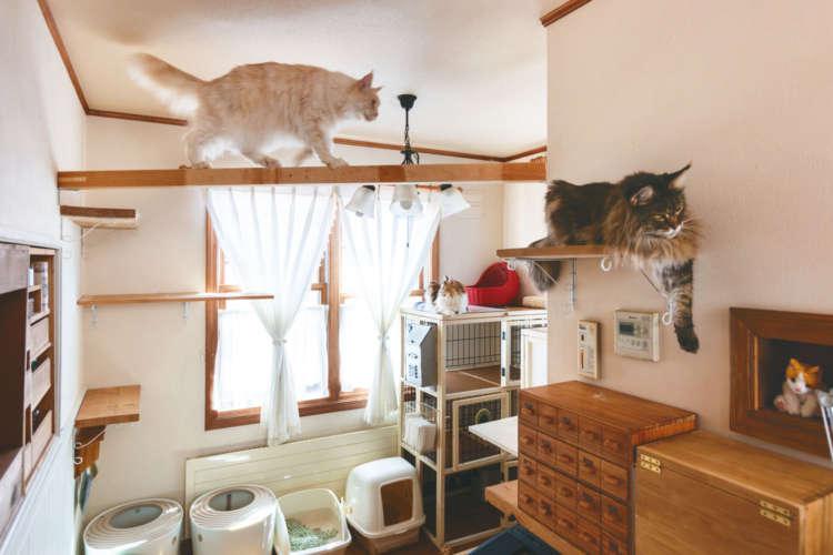 キッチン横を猫のご飯&トイレスペースに