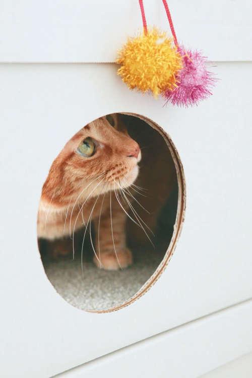 できあがり。側面の穴を大きく開ければ、猫が出入りできます。