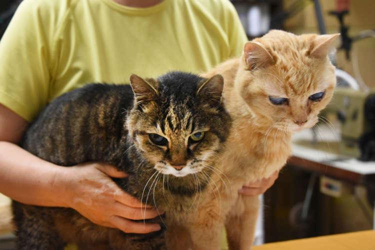 温泉街にあるオリジナル猫柄の和布小物屋【修善寺】