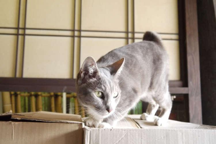 【猫びより】おねだり上手な春ちゃん登場!【津和野】(辰巳出版)