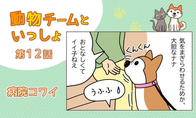 【まんが】第12話:【病院コワイ】描き下ろし漫画♪「動物チームといっしょ」(著者:月田エミ)