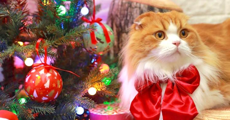人気インスタグラマーさんが教えてくれた! 愛猫と一緒にクリスマスを盛り上げるコツとは?【猫編】