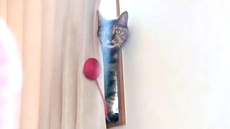 飼い主さんとお話したいニャンコ! でもカーテンに、邪魔をされてしまい…(笑)