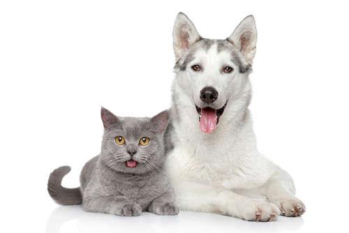毛づくろいの役割。犬と猫で毛づくろいの意味は違うの?