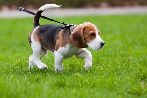 犬の歩き方がちょっとヘン…。犬の捻挫の症状と対処法