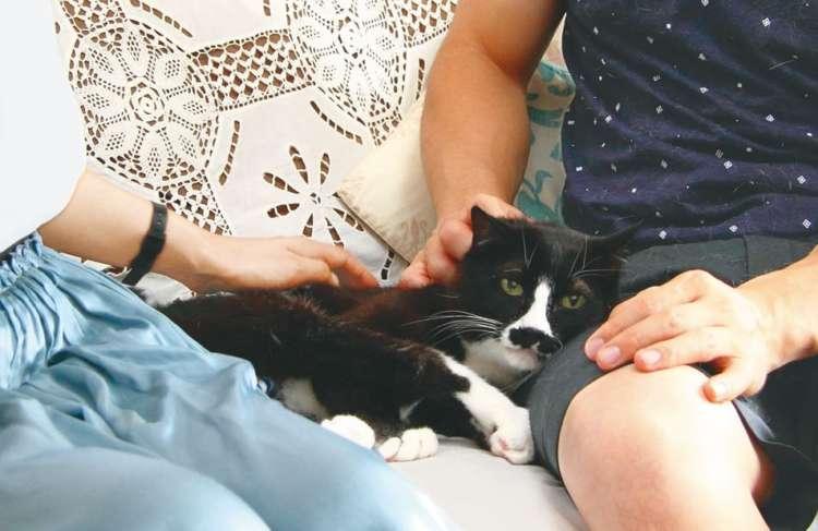 鈴木さんの愛情を一身に受けながらもこの表情。ソファの下には年上の後輩猫で喧嘩仲間のにわちゃん(15歳♀)が潜む