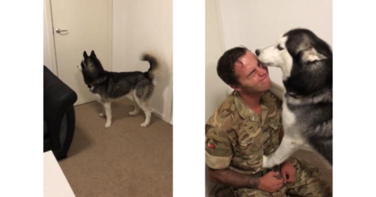 【ずっと待ってたよ】軍から帰ってきたパパを出迎えるワンコ! 全身で喜びを表現する姿に、胸が熱くなる