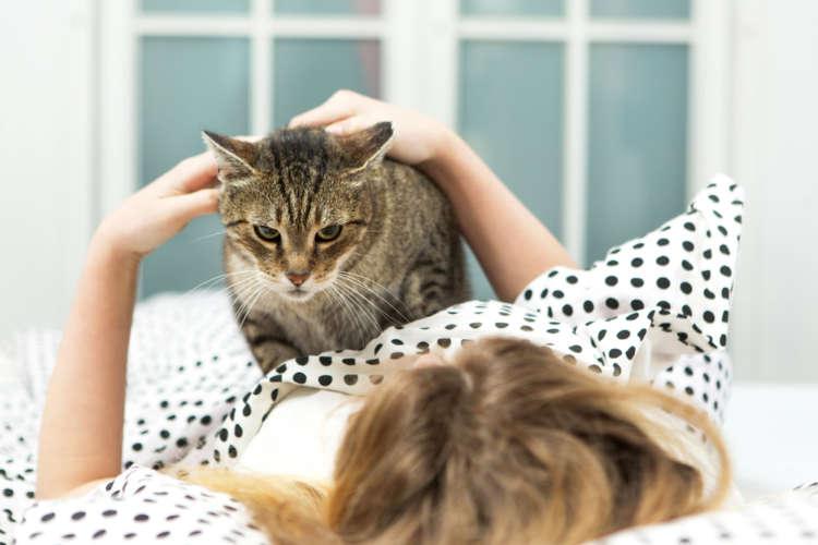 【獣医師監修】猫が一緒に寝たがるのはどうして? その理由を解説します