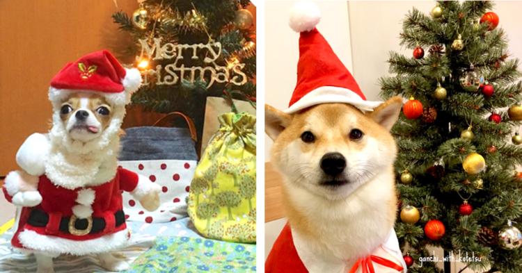 人気インスタグラマーさんに聞いてみた! 愛犬と一緒にクリスマスの思い出をつくるコツとは? 【犬編】
