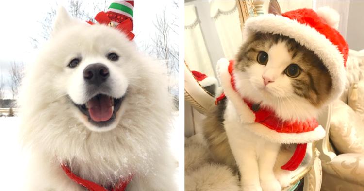 【メリークリスマス☆】家族と一緒にクリスマス気分を満喫する動物たちが集合です!(7枚)