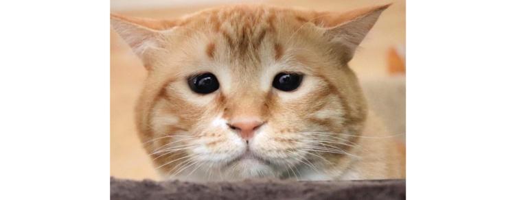 【一度見たら忘れられない♪】写真集発売の大人気猫「ぐっぴー」くん! その味わい深い魅力に迫る♡