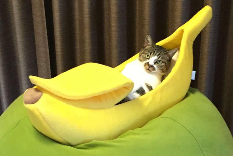 【たまらんッ♡】バナナ形のベッドでくつろぐ猫たち。その使いこなしっぷりがカワイイ(*´艸`*)