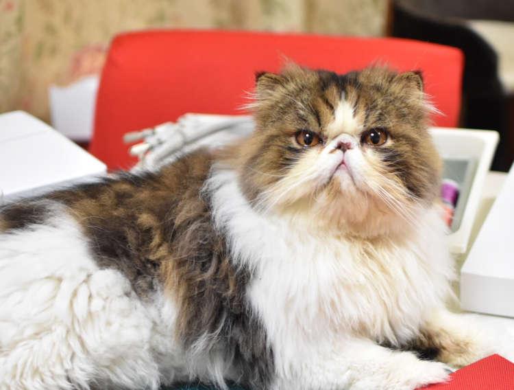 【今週のうちのニャンコ #6】とっても優しい猫、がんも君。最近は、弟の子守に奮闘中です…♡