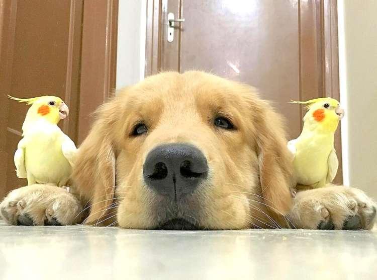 『酉年』→『戌年』へバトンタッチ♪  鳥とワンコの仲良しさんたちが大集合して、年末を盛り上げます♡