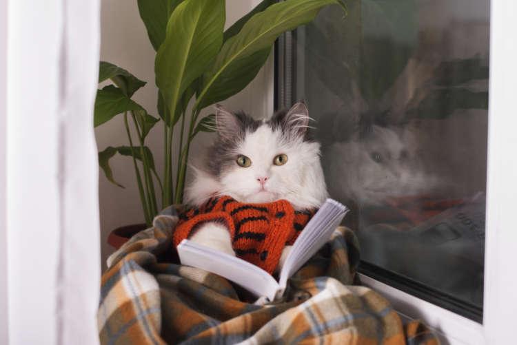 寒い冬の夜は「猫マンガ」を読もう! 心がグッと温まるオススメの7冊