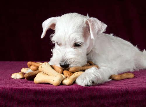 犬が人間用のお菓子を食べてしまった時の対処法