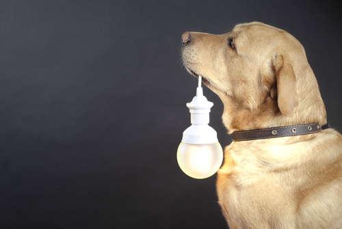 犬を留守番させる時は電気を点ける? それとも消しておく?