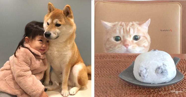 【PECOいぬ部&ねこ部】今年もっとも「いいね!」が多かった犬猫写真は…(*´艸`*)?