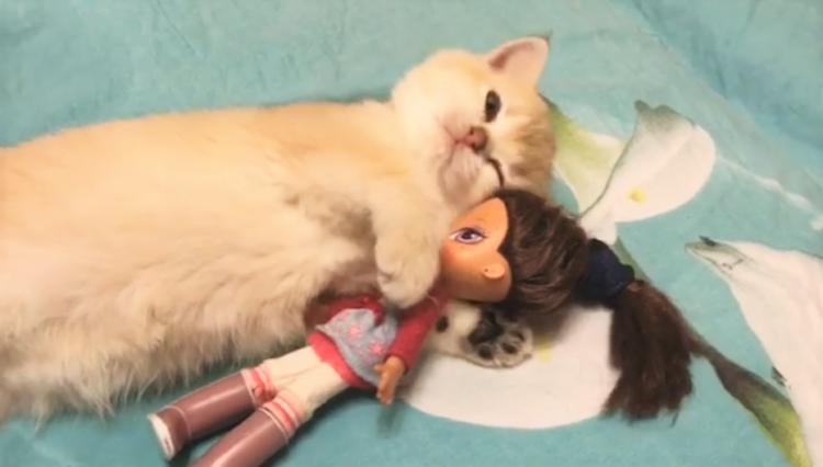 【一緒に、おねんねするニャ♪】人形をギュッと抱き寄せる子猫。その姿が、愛おしくてたまらない♡
