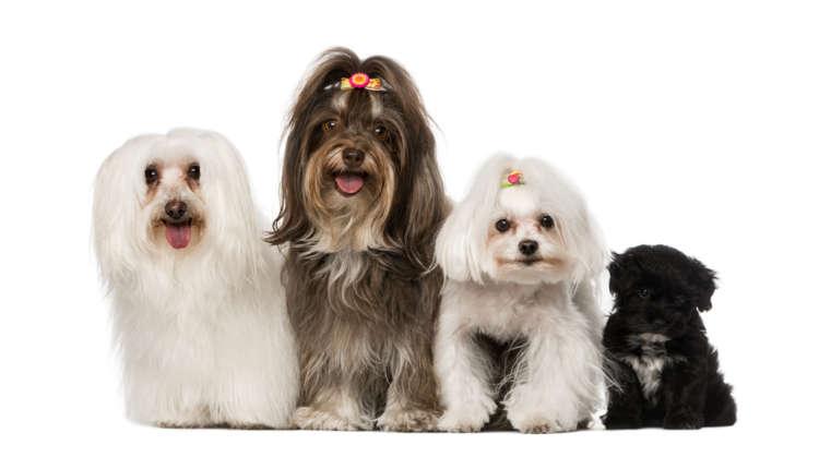 8連覇を獲得した犬種とは? 2017年「犬の種類」人気ランキング!