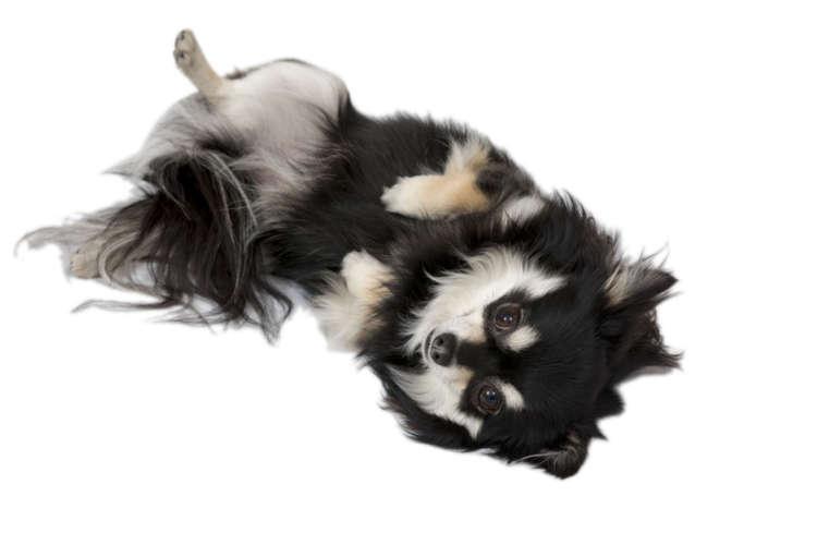 では、犬にも人間と同じような嫉妬心はあるのだろうか。
