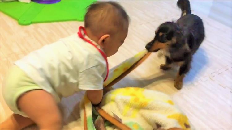 赤ちゃんと毛布の引っ張りっこをするワンコ! でも、だんだんと遊び方を『教える側』になっていき…♡