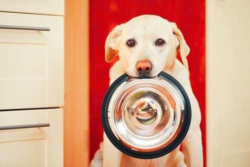 犬に人間用のししゃもを与えるデメリット