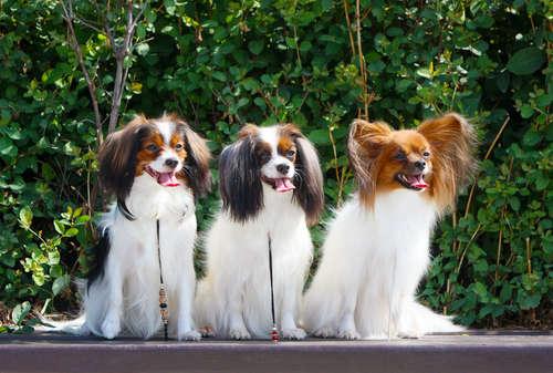 犬の多頭飼いについて。ケージは一緒でも大丈夫?