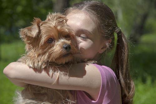 犬の水頭症 考えられる原因や症状、治療法と予防法