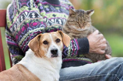 犬と猫の平均的な寿命と年齢の数え方