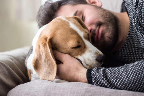 犬の低血糖 考えられる原因や症状、治療法と予防法