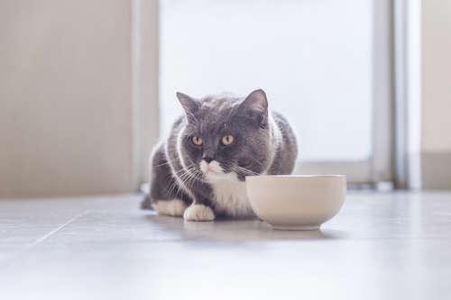 尿路結石に注意!  猫にほうれん草を与えてはいけません