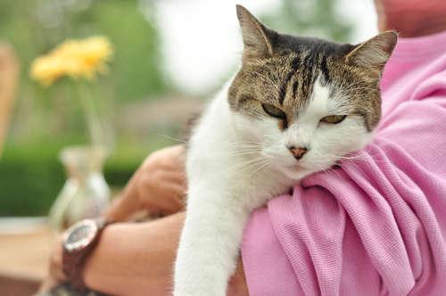 黄疸や下痢など猫の急性肝炎の病状と治療法