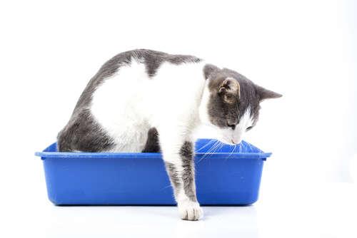 猫のおしっこが多い。慢性腎臓病の原因と対策