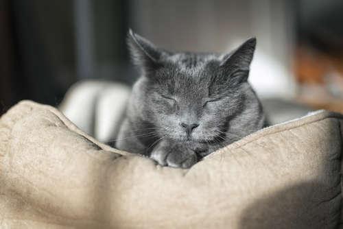 猫の認知症として考えられる原因や症状、治療法と予防法
