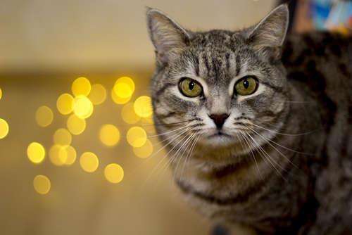 コンセント・電源コードに要注意!  猫が感電しやすい状況と対策