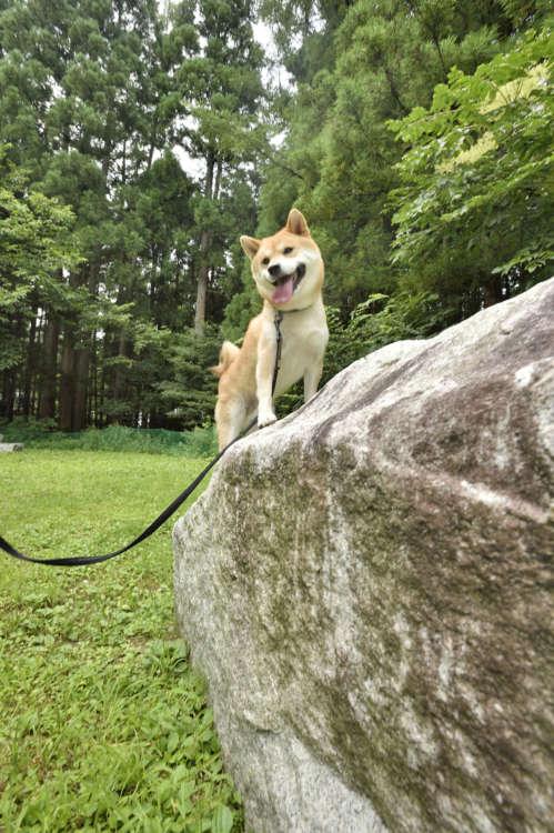 いい感じの岩を発見!