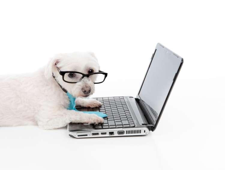 自分のペースでいろんな資格を取得できる「ペット通信講座」って何?
