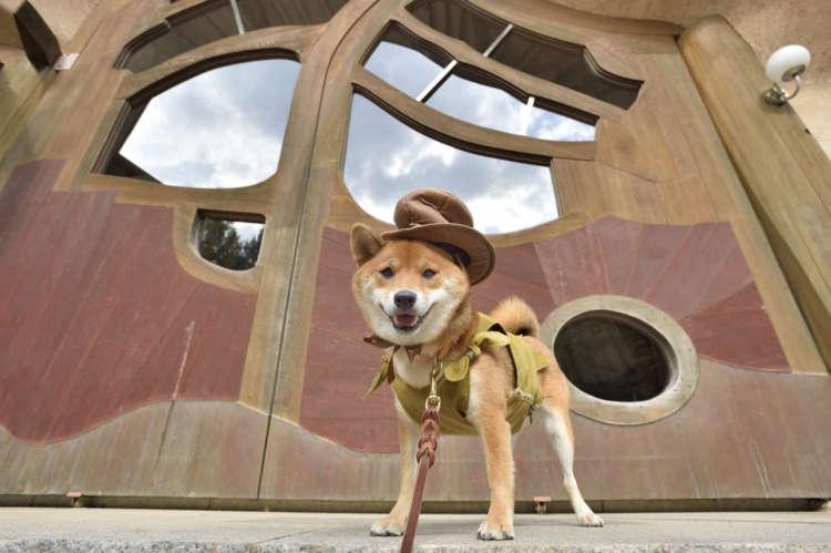 【さあ、幸せ探しの旅に出よう】シバコレ2018 柴犬谷の冒険