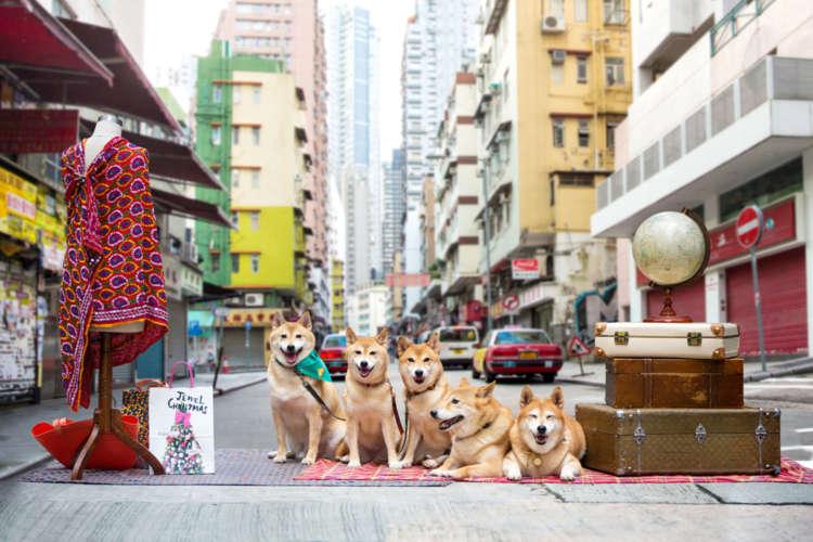 【飼い主とともに観光スポットを散歩しながらご紹介♪】 香港の街はWE5におまかせ