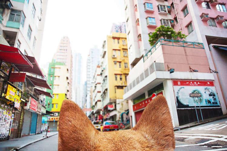 ザ・香港! ビル群を見上げる
